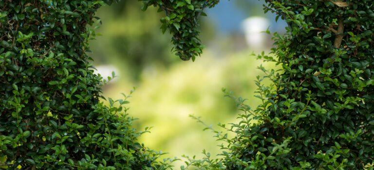 Diervriendelijke tuin